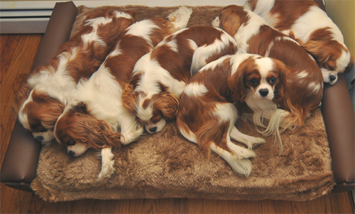 Carter's crew on modern day bed