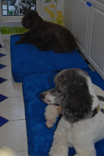 fannie and forrest on their memory foam dog bed